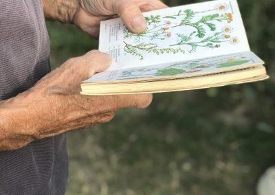 Lepidoptarium Burgeronderzoekers