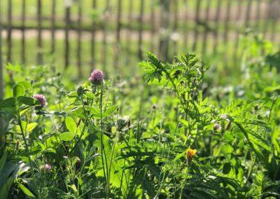 Vlindertuin Ridder Hoen Park